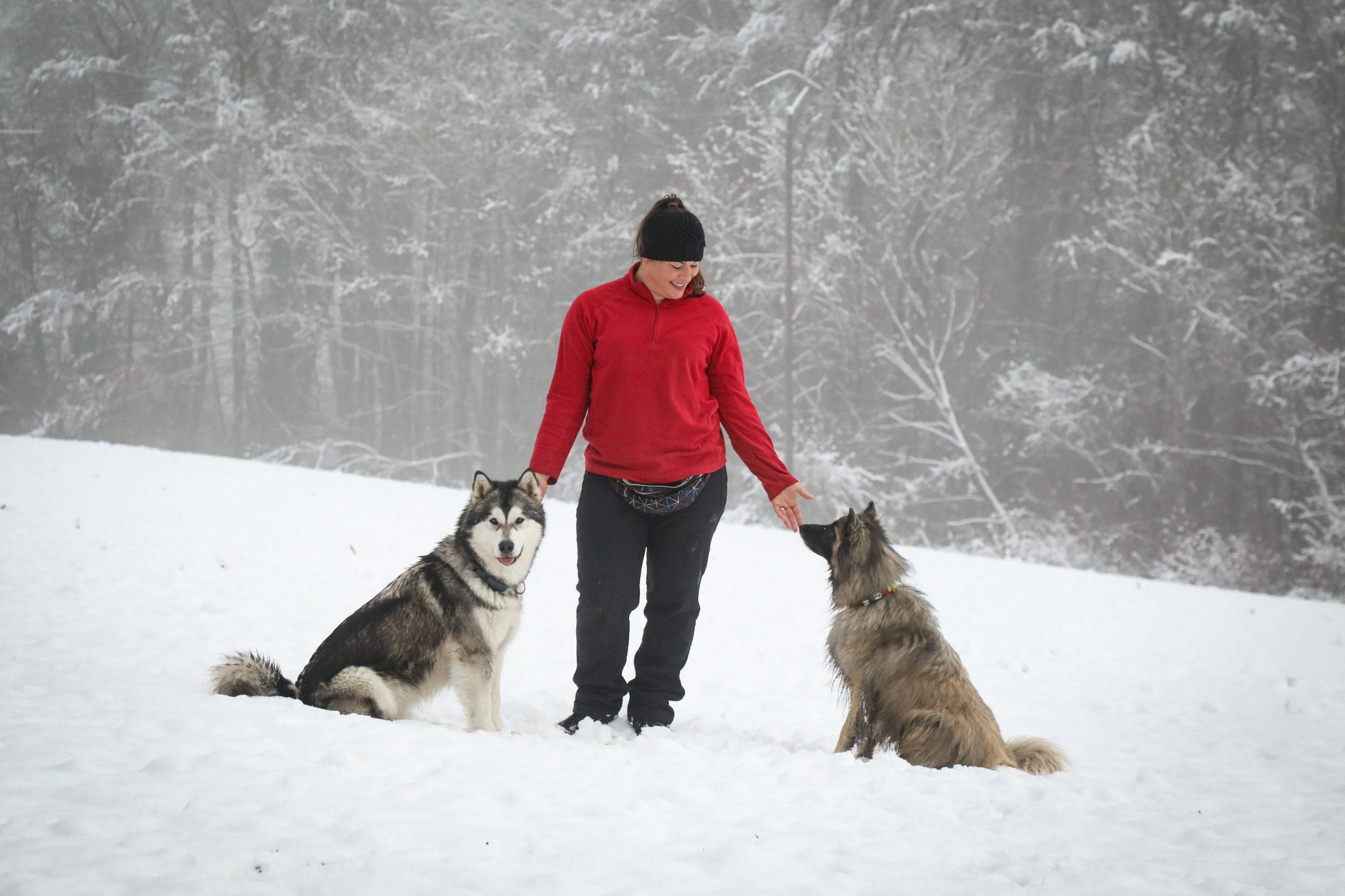 E'PATTES MOI cynologiste chien neige