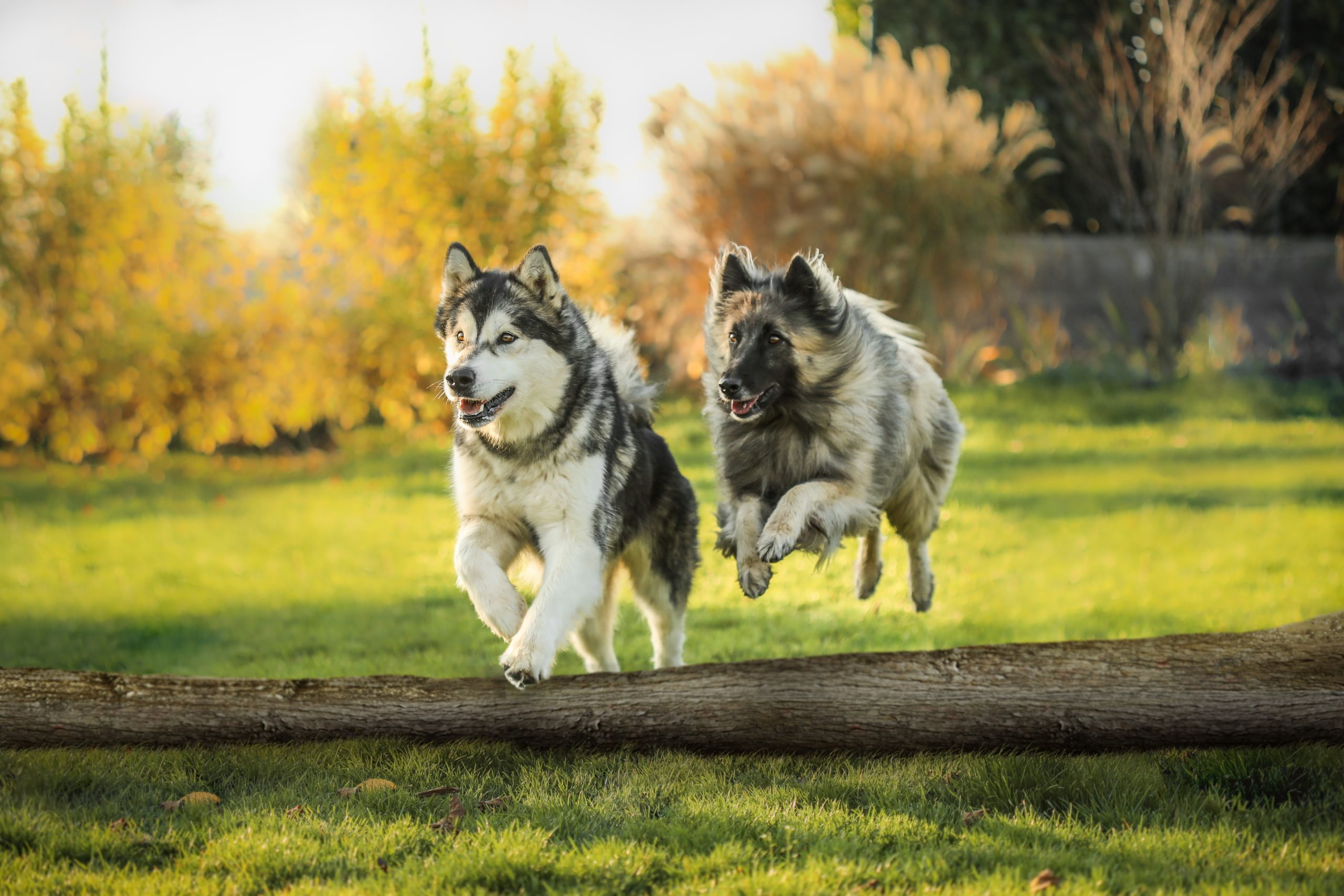 Beaux chiens action