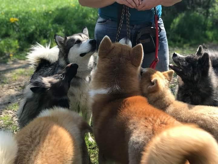 E'PATTES MOI cynologiste chien groupe