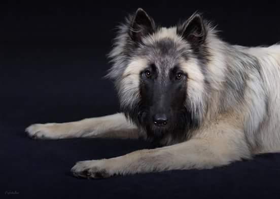 trop beau chien